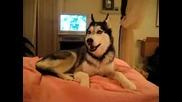 Кученце казва I love you