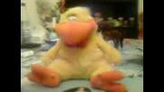 Яко Пиленце - Зарибява