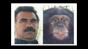 Maymunlar diyarindan bir maymun, maymun, biji apos, maymun apo