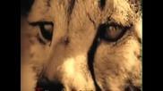 Котки - Кажете Си Молитвата