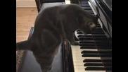 до сега - Коте свири на пиано