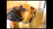 Talking Dog - Оскар Говорещо Куче