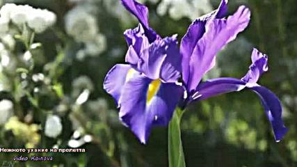 Нежното ухание на пролетта