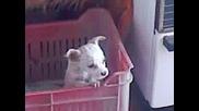 Много сладко кученце вие ;d