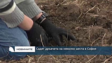 Садят дръвчета на няколко места в София