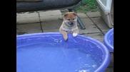 Реакцията на малко кученце когато види собствения си басейн!