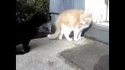 Две Котки Се Карат И Бият Пародия На Марин И Мустафа