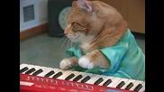 Сладко музикално котенце