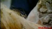 Откриха напълно запазен мамут в Сибир