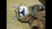 Котка Спи Като Пън
