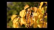 Par pedejo lapu (листья Желтые) - Martin Loik