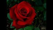 Gunss Roses-Dont cry prevod
