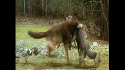 New Moon - Werewolf fight scene