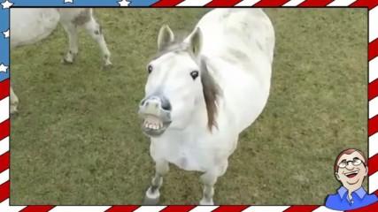 Да се изтърсиш от коня ;д - Много смях