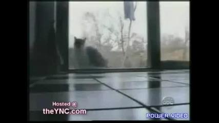 Най - смешните котки на света :)