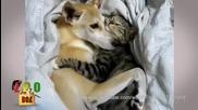Любовта между кучета и котки