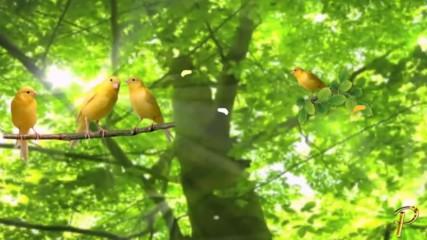 Зеленото - цветът на живота, обновяването, природата и енергията! ... ( music by Tim Janis)