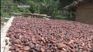 Производители на какао опитват шоколад за първи път през живота си