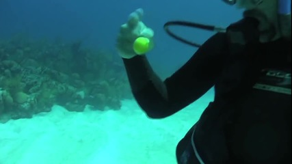 Как да счупите яйце под водата?