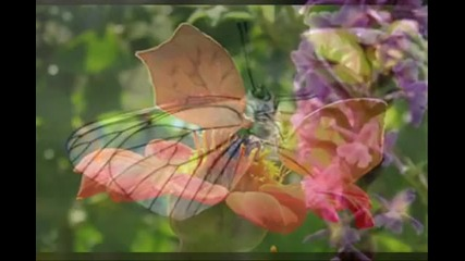Butterfly - Lovers - Vanessa Mae (violin Concerto)