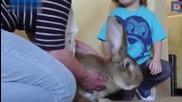 Дарий и Джеф - най-големите зайци в света