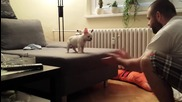 Кученце се престрашава да скочи в ръцете на стопанина си