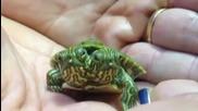 Двуглава костенурка в Тексас на име Телма и Луиз