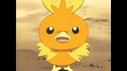 Mays Torchic evolves into Combusken
