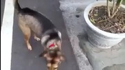 куче иска да се вози с мотор