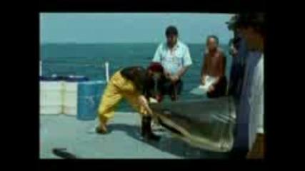 Спасяване На Човек От Акула