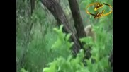Малки Сладки Лъвчета - Компилация