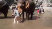Момиче се радва на слон, но никой не очакваше че може да се случи това