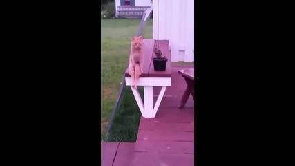 Котка заема човешка поза за седене