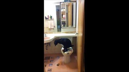 Забавно - куче ползва Wc :)