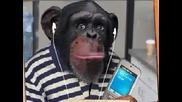 Маймуните По Света