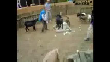 Когато Животните В Зоопарка Се Разбеснеят