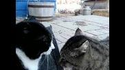 Котки Си Говорят