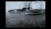 Речни чудовища- змиеглави риби убийци бг аудио (discovery channel)