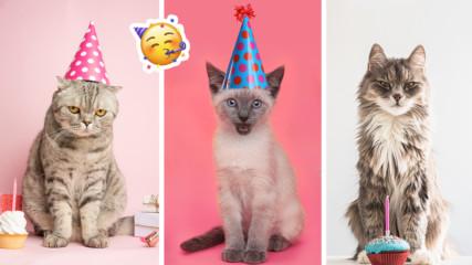 В световния ден на котките: Кратка и интересна история за мъркащите ни приятели
