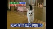 Най - невинната котка!!!