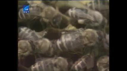 Насаме с пчелите(bg Audio) 11 част