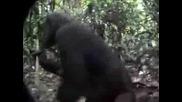 Маймуни в джунглата!