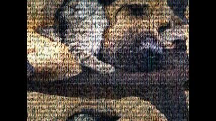 animals - tigers, lions, birds, cats, dogs, leopard и мн. др+ Cascada - evacuate the dancefloor - Za