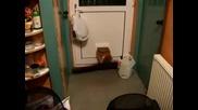 Fat Cat Vs. Cat Door