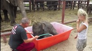Слонче се наслаждава на душ