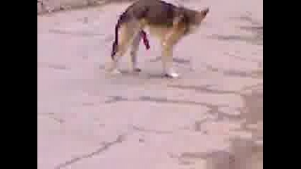 Куче С Голяма Ланга