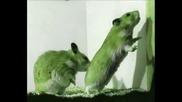 √√√ Hamster Dance √√√