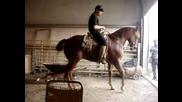 Жокей кара кон да танцува