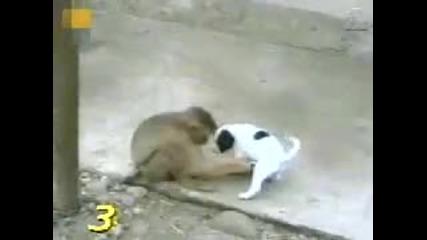 Маймуна се пръска от смях