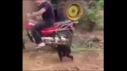 Маймунка изпада в ярост че не я возят на мотор
